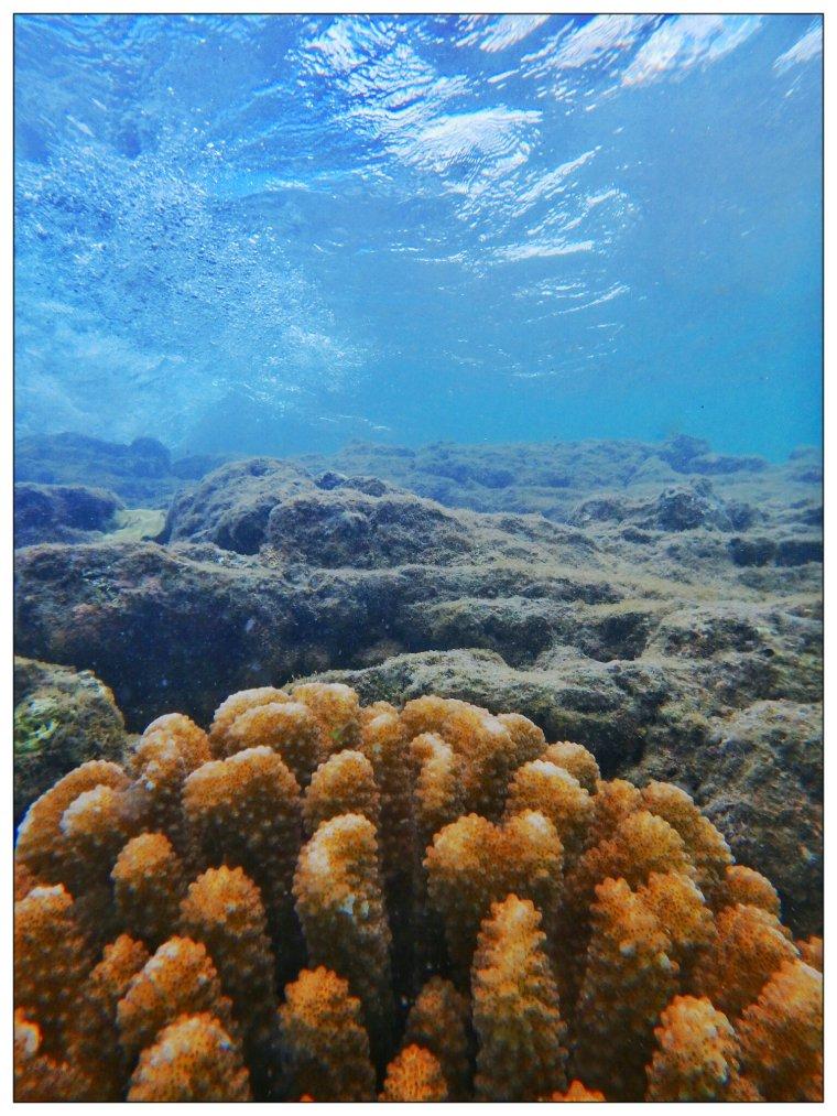 underwater view.jpg
